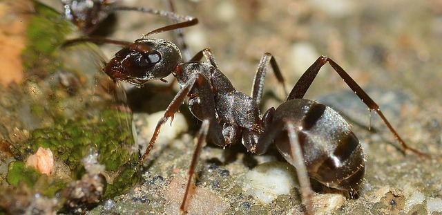 mind-blowing facts about ants